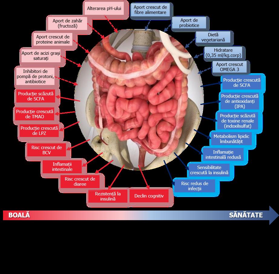 pierderea în greutate și compoziția microbiota a intestinului)